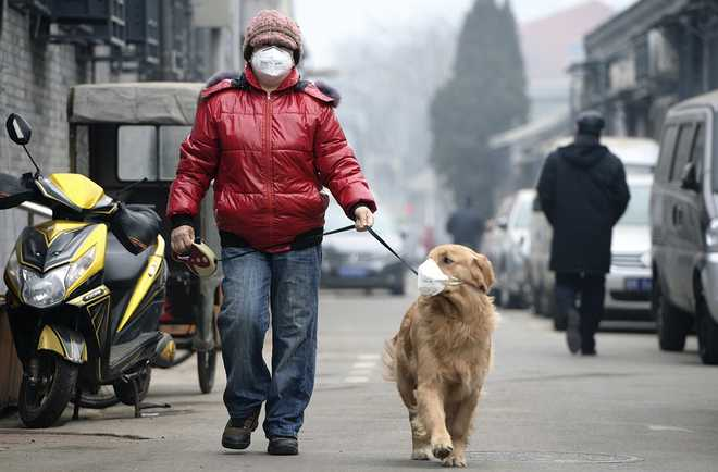 Pet Peeves On Bad Air Days
