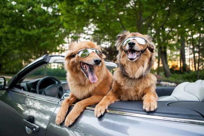 Cab Service For Pets