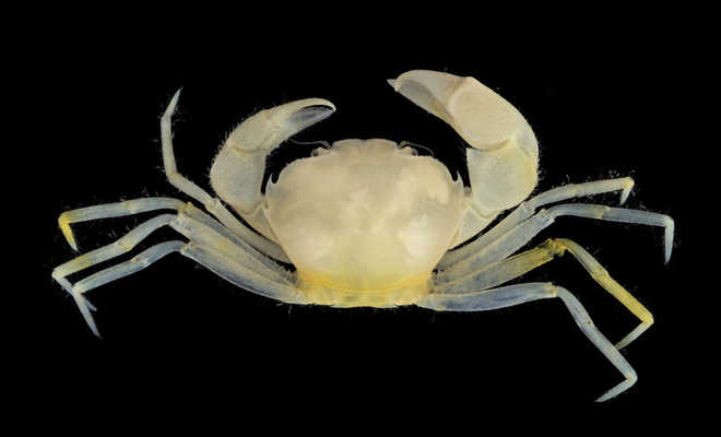 Crab Species Named After Harry Potter Series
