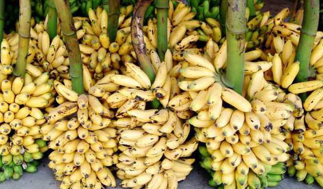 Why You Should Have Banana Peel