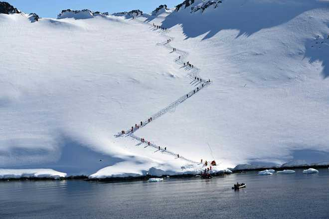 In Antarctica, tourists swim among penguins