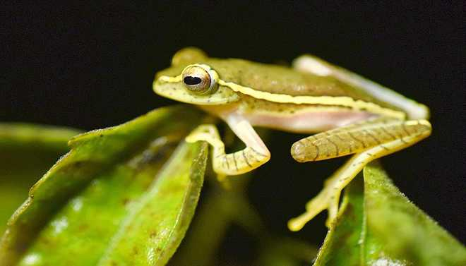 Scientists Create 'Living Robots' Using Frog Cells
